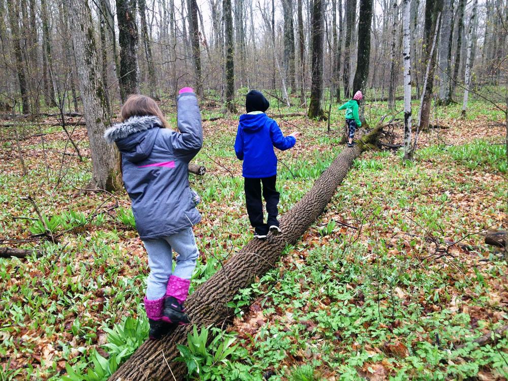 Little ones in the woods